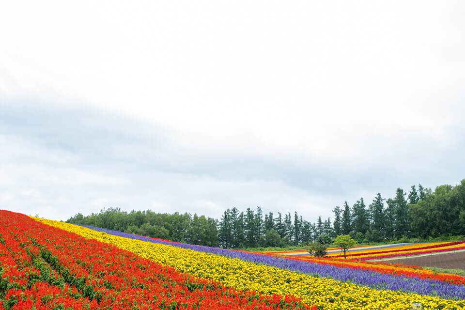 北海道・美瑛【四季彩の丘】JRとタクシーで行ってきた【旭川出発】