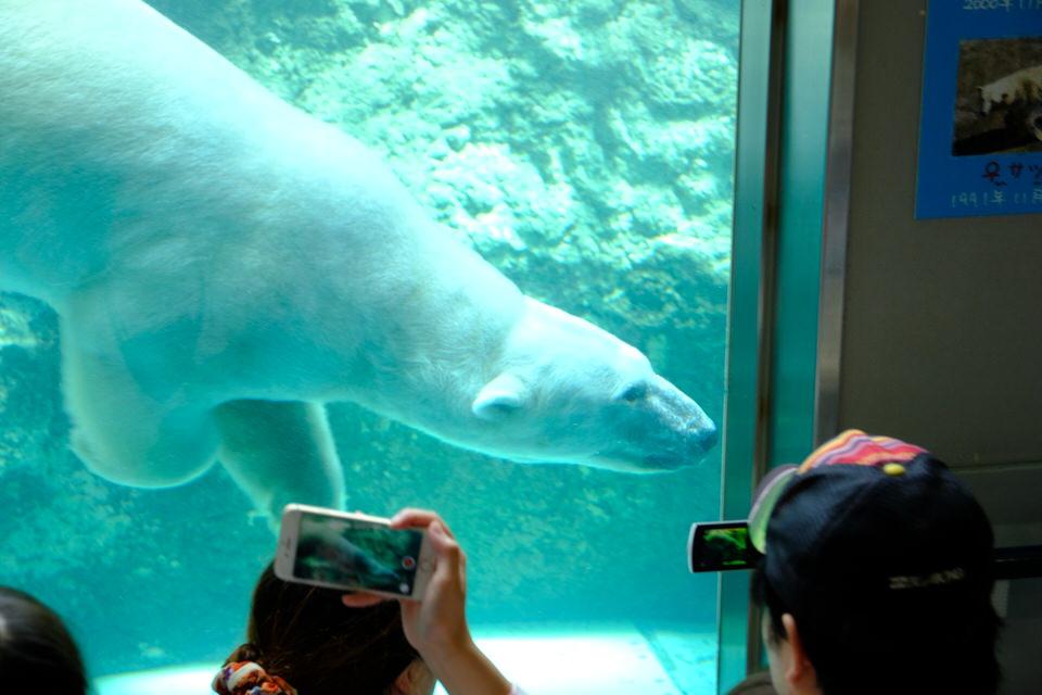 旭川周辺のおすすめスポット:旭山動物園